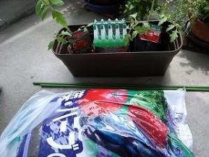 トマトの苗と、土と、支柱
